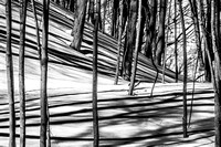 Tree Shadows in Winter (no. 2)